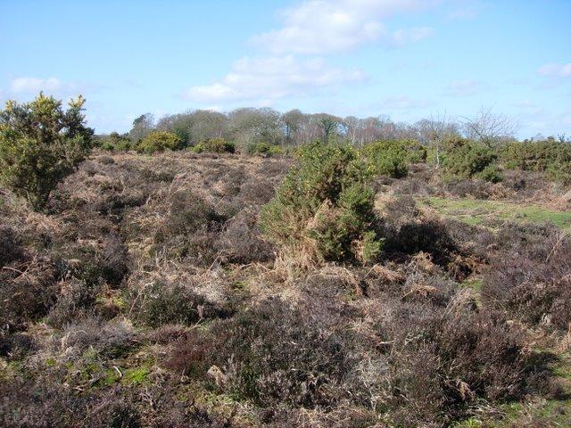 Patchy heath