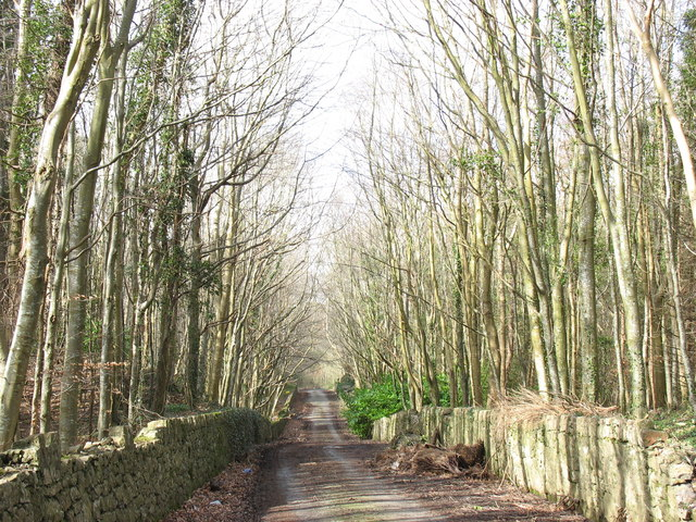 The road through Warren Covert