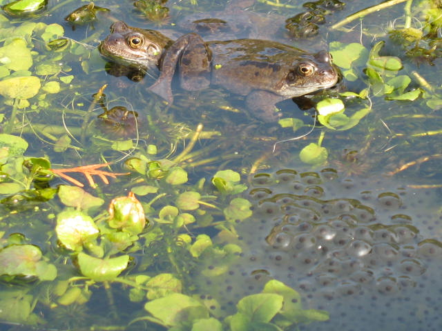 Frogs and Spawn