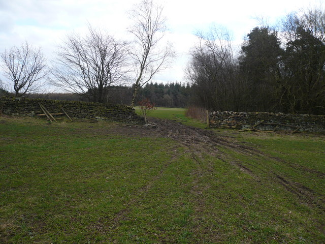 View  across fields to Seventy Acre Wood