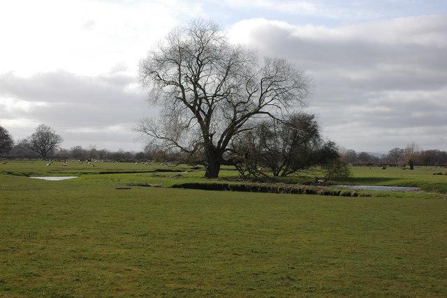 Tree beside the River Arrow, Arrow Green