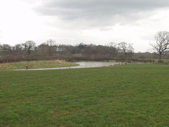 Duck flighting  pond at Caegoody