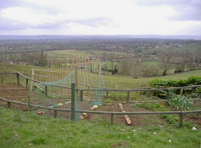 Vegetable patch, North Nibley