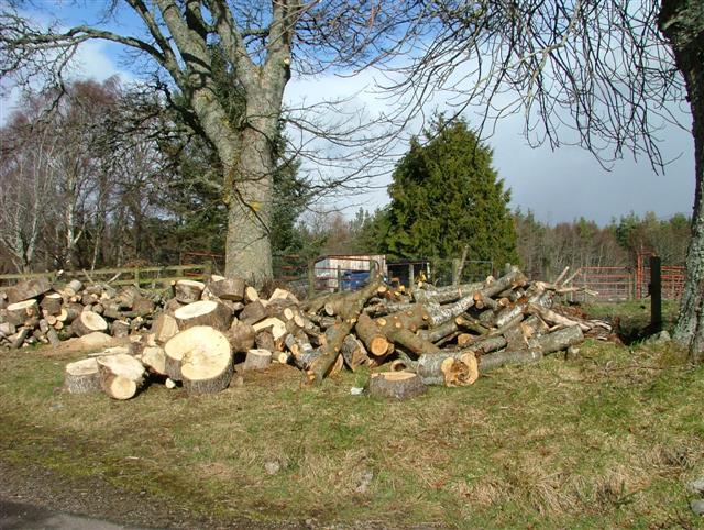 Tree Felling at Black Dyke