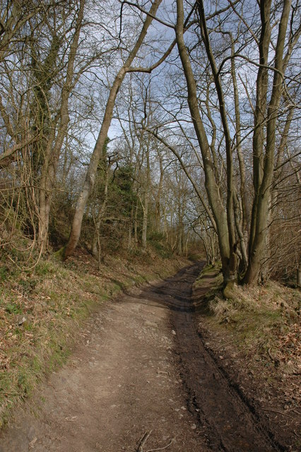 Track through Gullet Wood