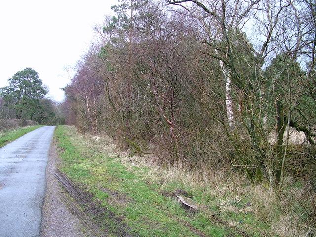 Bleatarn wood