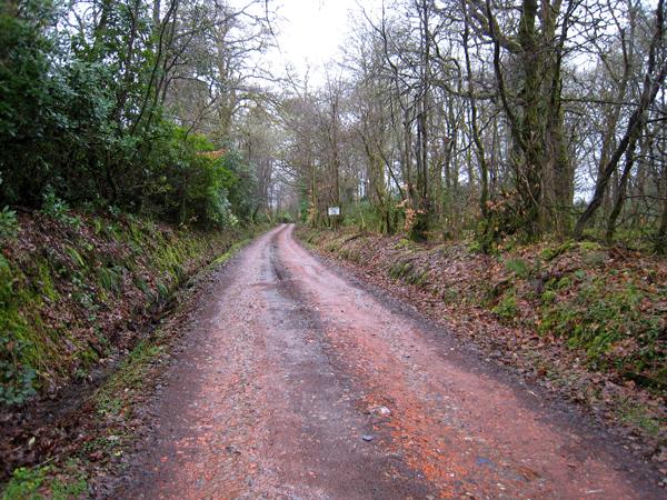 Cameron Farm track