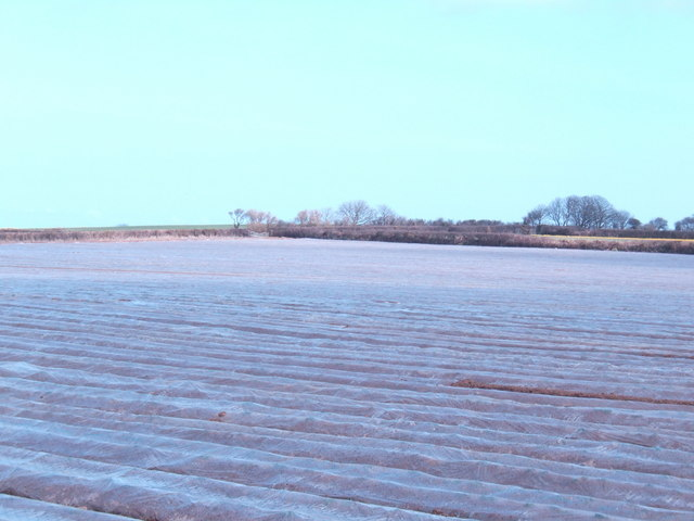 Field of plastic