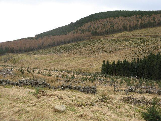 Forest near Glenmarkie Lodge