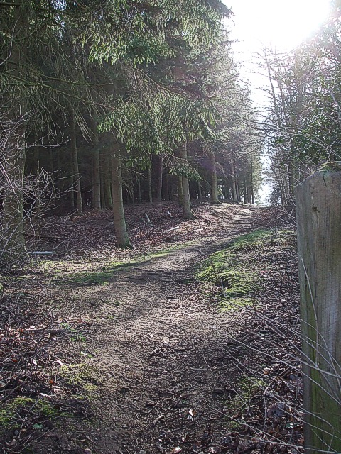 Footpath into woods near Longslade Cottage