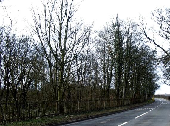 Brook Wood, Crank
