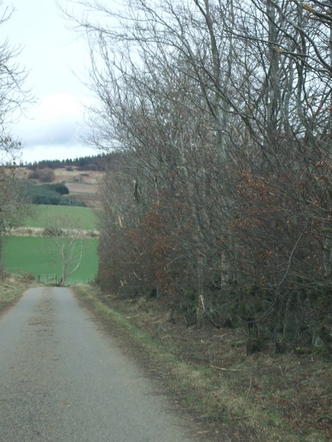Road towards Pitcullen from Craigmyle