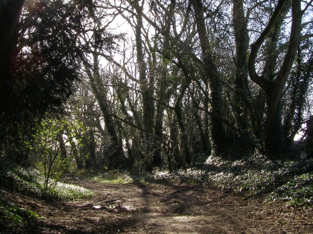 Silkstead Lane, Yew Hill
