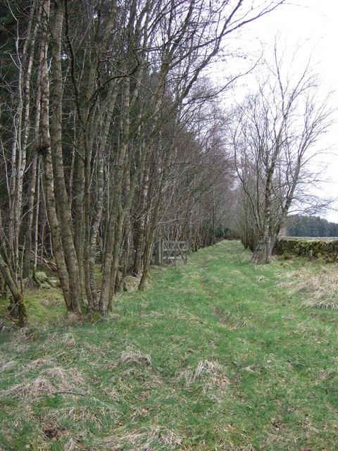 Track to Glassel through Larnach Wood