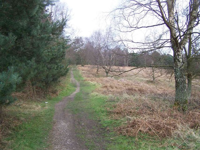 Footpath, Cannock Chase