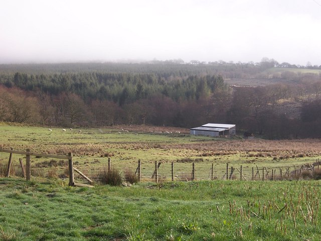Cwmbargoed Farm and Pendrainllwyn forestry plantation