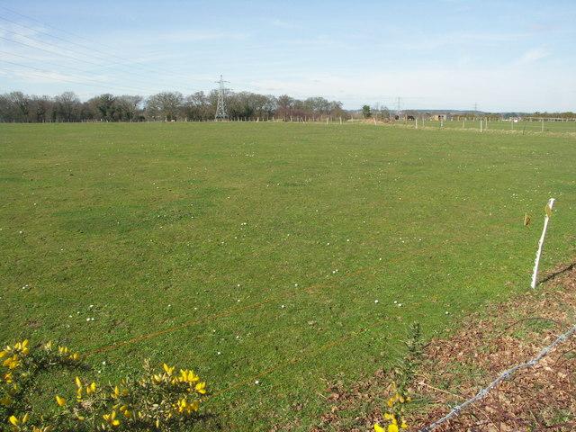 Fields at Bearwood