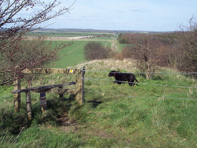 The Ackling Dyke near Sixpenny Handley