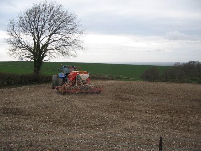 Spring Sowing (2)