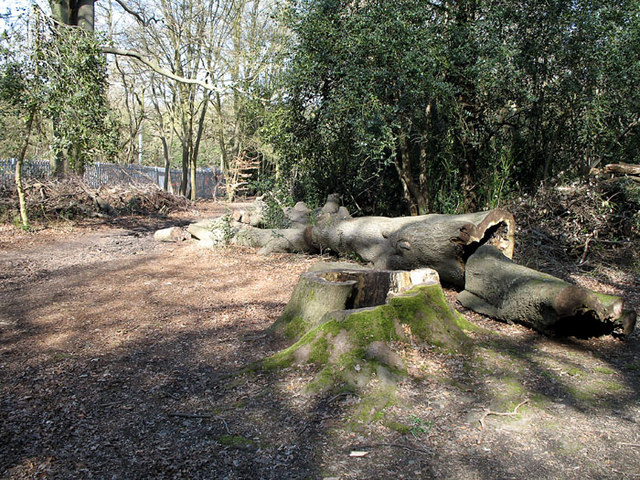 Fallen tree on Newmans hill