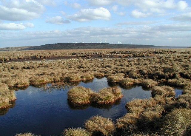 Great Peat Moss