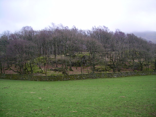 Newfield Wood