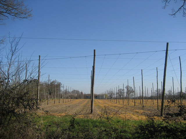 Hop Fields at Wagstaff Farm, Wagstaff Lane, Biddenden