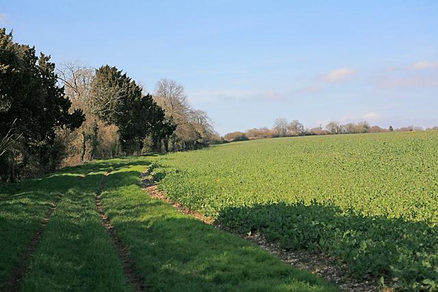 Footpath from Whelpley Farm towards Pepperbox Hill