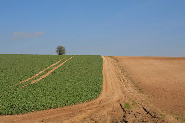 Farmland NE of Whelpley Farm