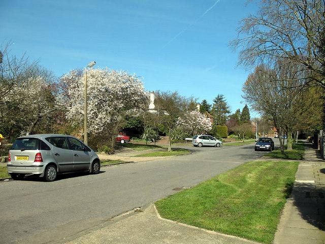 Beech Hill Avenue
