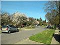 TQ2697 : Beech Hill Avenue by Martin Addison