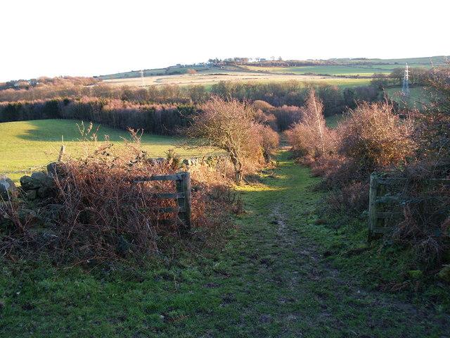 Byway from Apperley Fell to Kipperlyn