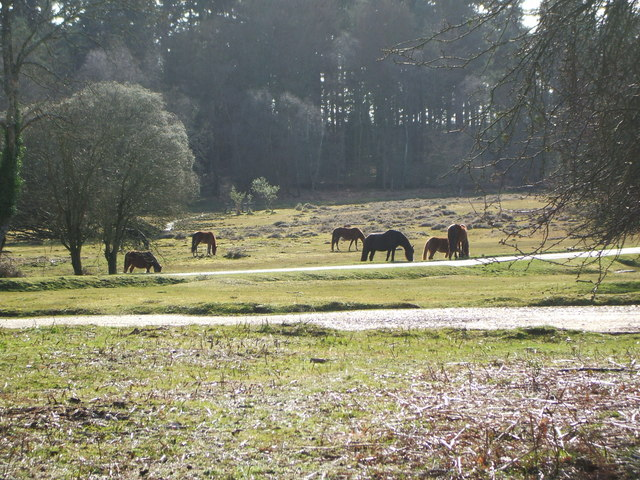 Grazing Ponies at Millyford Bridge.