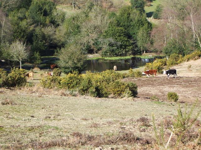 Acres Down Pond