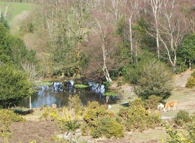 Acres Down Pond.