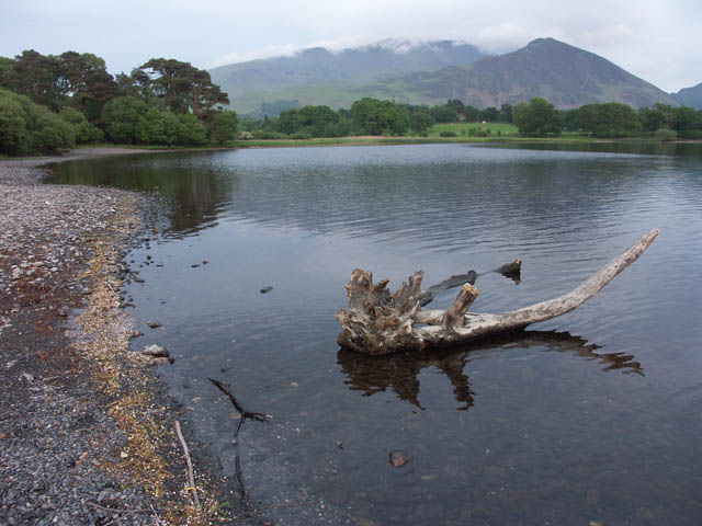 Lakeshore with driftwood - Bassenthwaite Lake