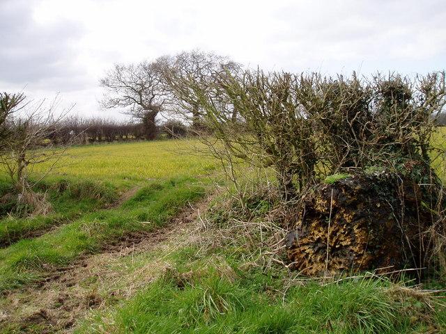 Farmland in March at Winterbottom