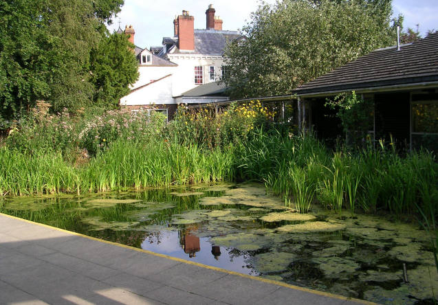 Preston Montford Field Centre - Pond
