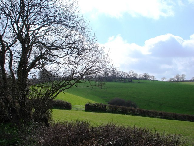 Trees and pasture land, view back to Kennels Road