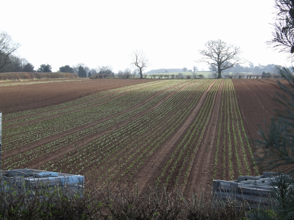 Newly planted crops