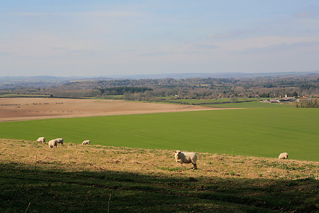 View towards Salisbury Cathedral from near top of Pepperbox Hill