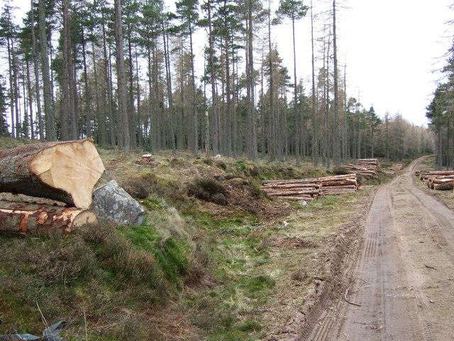 Logging in Turk Wood