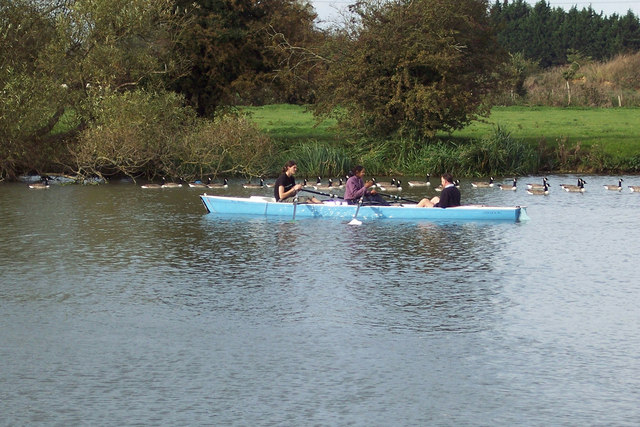 Rowers and geese at Culham Reach