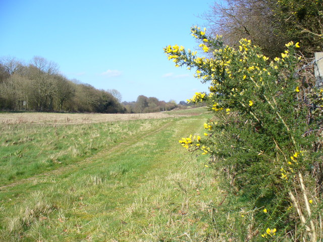 Footpath Along Former Meon Valley Railway Line