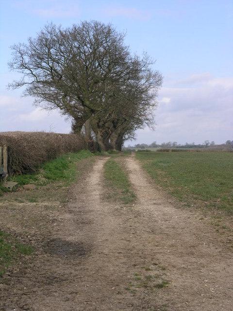 Bridleway and Big Trees