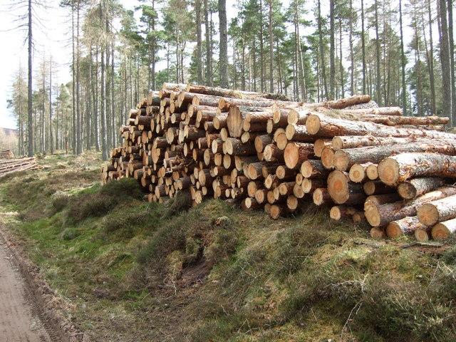 Woodpile in Turk Wood