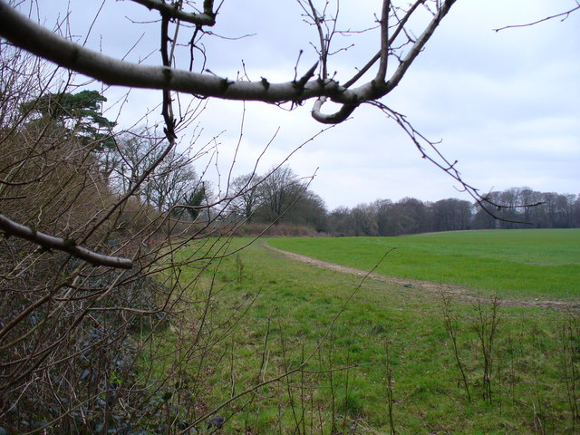 Field West of Monkwood