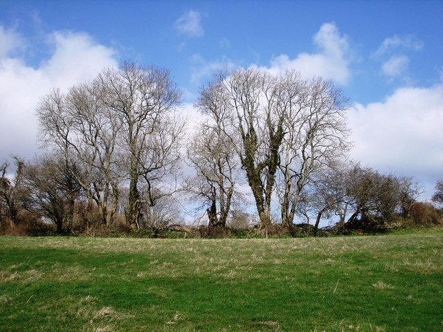 Trees above Galmpton Creek, near Manor Farm