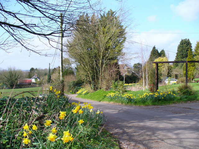 Spring in the East Hampshire Lanes