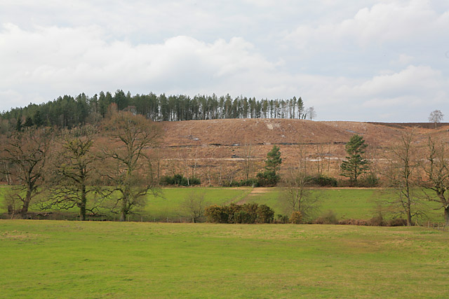 Clear-felled part of Newlands Plantation